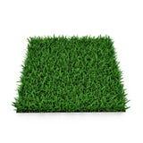 Heilige Augustine Warm Season Grass op wit 3D Illustratie Stock Afbeeldingen