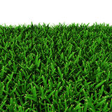 Heilige Augustine Warm Season Grass op wit 3D Illustratie Royalty-vrije Stock Afbeelding