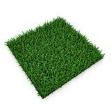 Heilige Augustine Warm Season Grass op wit 3D Illustratie Stock Afbeelding