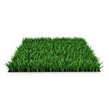 Heilige Augustine Warm Season Grass op wit 3D Illustratie Royalty-vrije Stock Fotografie
