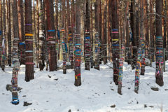 Heilige Bäume Lizenzfreie Stockfotos