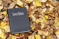 Heilige Bibel Bibel geschlossen auf gefallenen Herbstlaub lizenzfreies stockfoto