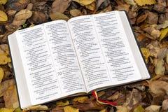 Heilige Bibel Offene Bibel auf gefallenen Herbstlaub lizenzfreies stockbild