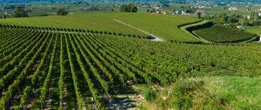 Heilige-Emilion-wijngaard landschap-Frankrijk Royalty-vrije Stock Afbeeldingen