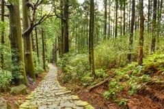 Heilige Japaner-Spur Kumano Kodo lizenzfreie stockbilder