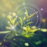 Heilige Meetkunde Wiskunde, aard, en spiritualiteit in aard De formule van aard Er zijn geen begin en nr vector illustratie