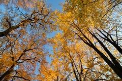Heilige Petersburg, Rusland - Bomen in Peter en Paul Fortress, Oktober, de Gouden herfst royalty-vrije stock foto