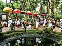 Heiliger Affe Forest Sanctuary, Padangtegal, Ubud, Bali Indonesien Stockfoto