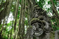 Heiliger Affe Forest Sanctuary in Ubud Bali-Insel, Indonesien Lizenzfreie Stockfotografie