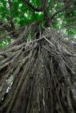 Heiliger Affe Forest Sanctuary in Ubud Bali-Insel, Indonesien Lizenzfreies Stockbild