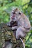 Heiliger Affe-Wald Lizenzfreies Stockfoto