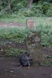 Heiliger Affe-Wald, Ubud, Kirchhof Lizenzfreie Stockfotografie