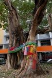 Heiliger Baum lizenzfreies stockfoto