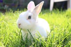 Heiliges Kaninchen Stockbild