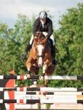 HEILIGES PETERSBURG 5. JULI: Rider Kristupas Petraitis auf Barichela Lizenzfreie Stockbilder