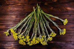 Heilpflanze Helichrysum arenarium auf Holztisch Beschneidungspfad eingeschlossen Stockbilder