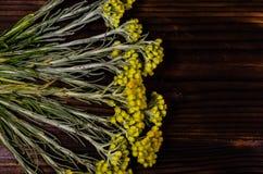 Heilpflanze Helichrysum arenarium auf Holztisch Beschneidungspfad eingeschlossen Stockbild