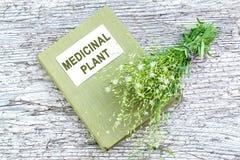 Heilpflanze Stellaria holostea und Verzeichnisheilpflanze Stockbilder