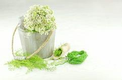 Heilpflanze weißes millefolium der Schafgarbe oder Achillea Heilpflanzeschafgarbe auf weißem Hintergrund Stockfotografie