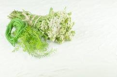 Heilpflanze weißes millefolium der Schafgarbe oder Achillea Heilpflanzeschafgarbe auf weißem Hintergrund Stockfotos