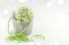 Heilpflanze weißes millefolium der Schafgarbe oder Achillea Heilpflanzeschafgarbe an in einem hölzernen Eimer Stockbilder