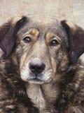 Heimatlos. Streuhund. Ein Kopf eines Hundes. lizenzfreies stockbild