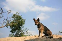 Heimatlose Hundereste auf der Klippe Lizenzfreie Stockbilder