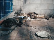 Heimatlose Katzen Stockbild