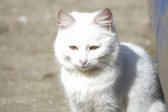 Heimatlose weiße Katze Stockfoto