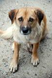 Heimatloser Hund Stockbild