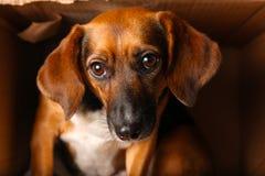 Heimatloser Hund im Kasten lizenzfreie stockbilder