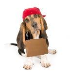 Heimatloser Hund mit Zeichen und Bandanna Stockbild