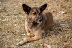 Heimatloser Streuhund Stockfotos