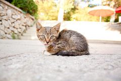 Heimatloses krankes Kätzchen Lizenzfreies Stockbild
