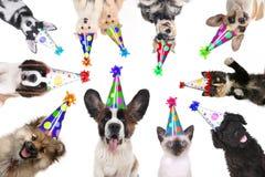 Heimtiere lokalisierte tragende Geburtstags-Hüte für eine Partei Stockfoto