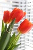 Eheringe und Tulpen Stockfotos