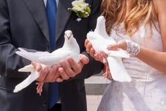 Heiratende weiße Tauben Stockbilder