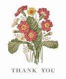 Heiratsdank und Einladung PrÃmula-Karte Feld-Vektorstich Victorian Illustration Blumen der Kamille schöne realistische