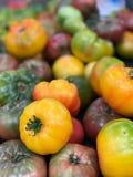 Heirloom żółty Pomidor Zdjęcie Stock