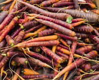Heirloom Carrots Stock Images