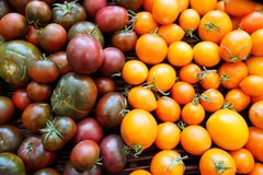 Heirloom cherry tomatoes for sale in farmer's market in summer Stock Image
