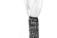Heirloom Corn Stock Photography