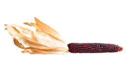 Heirloom Corn. Heirloom red corn on a white background Royalty Free Stock Images