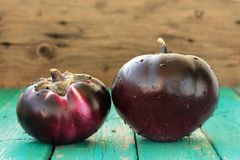 Heirloom fresh organic eggplants on turquoise background Royalty Free Stock Photo