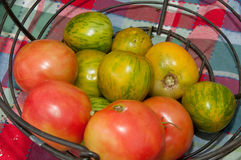 Heirloom green and red tomatoes Stock Photography