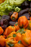 Heirloom peppers. A pile of various color heirloom bell peppers Royalty Free Stock Image