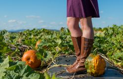 Heirloom Pumpkin at feet of relaxed woman. In sunny pumpkin patch royalty free stock photos