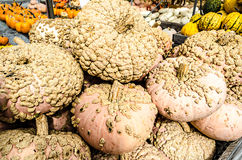 Heirloom Pumpkin Pile Scabby Stock Images