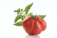 Heirloom Red Tomato, with leaf. Heirloom Tomato, large close-up whole on white background stock photos