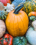 Heirloom squash on display 16 Stock Images